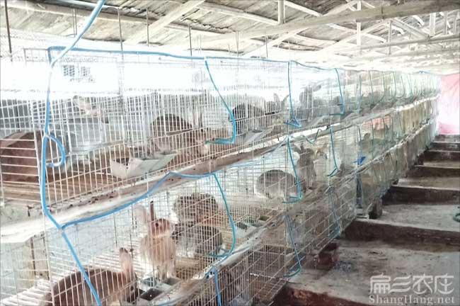 温州西野兔养殖