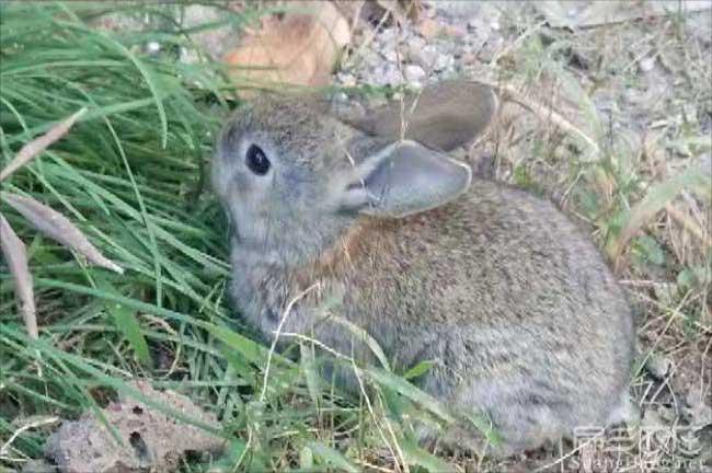 九江兔子价格