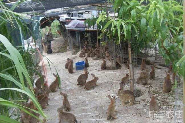云南恢兔种苗