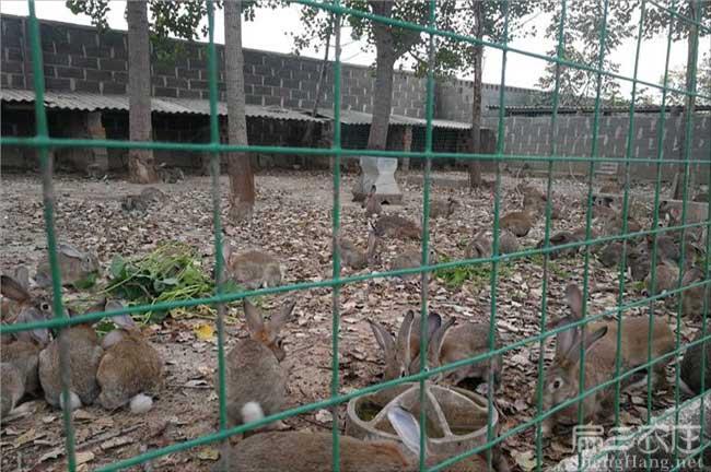 金华兔子养殖