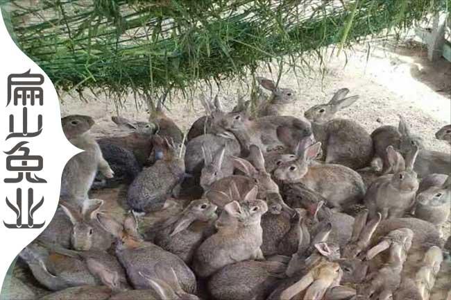 泉州兔子养殖