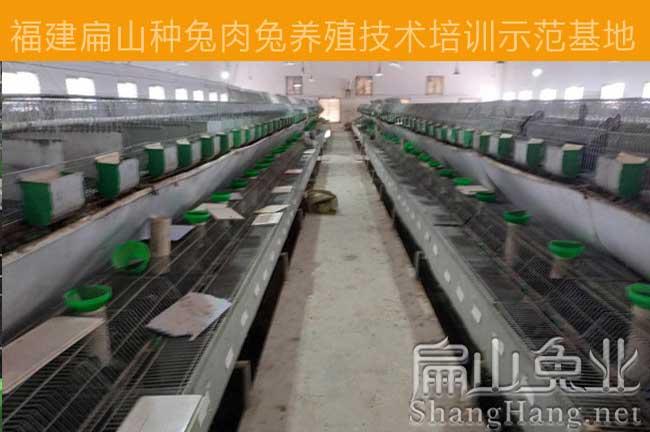 九江种兔养殖基地