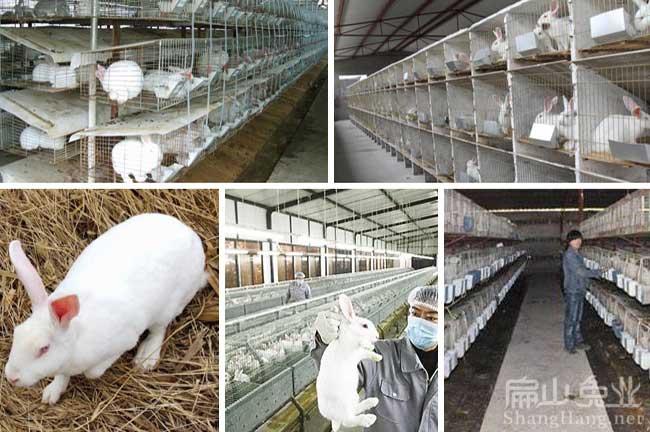广东种兔繁殖场