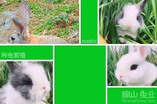 肉兔养殖成本