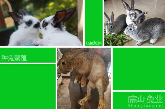 雅安兔子养殖