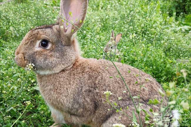 广东野兔养殖
