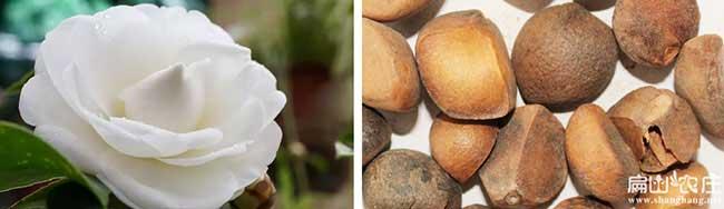 池湖油茶种植技术培训