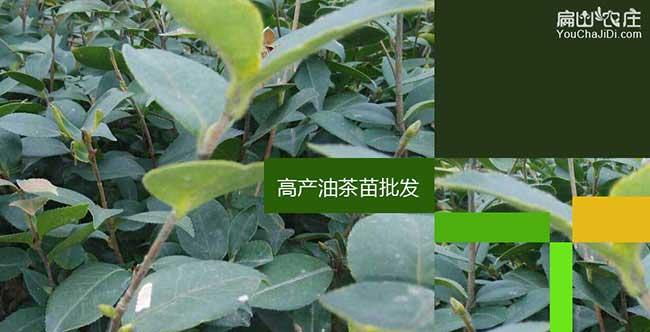 樊川镇造林前的整地技