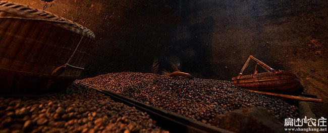 宿城区油茶种植重在泗