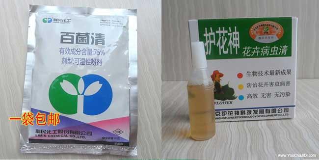 荷塘油茶生根粉