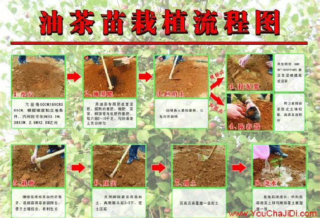 杨叶丰产技术措施技术