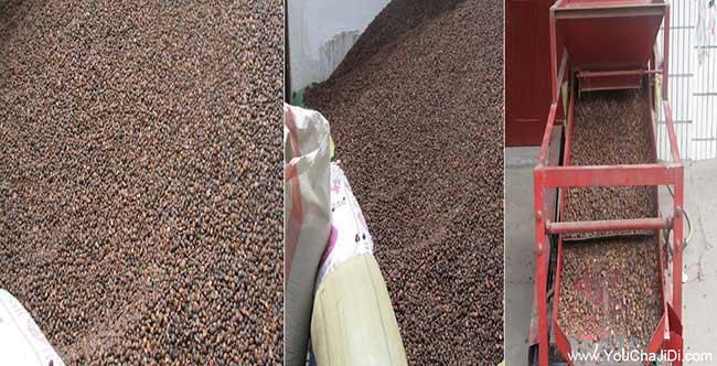 上饶茶籽回收