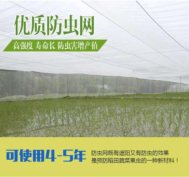 朱马店国内首家集油茶