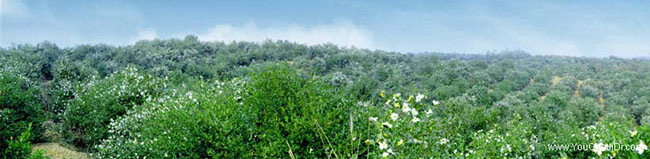 龙湖区源油茶苗的土壤