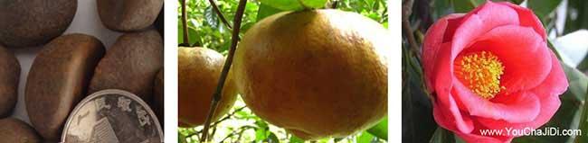 昆山市茶树管理技术与