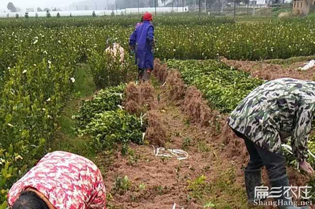 龙蟠扁山中国最多出口
