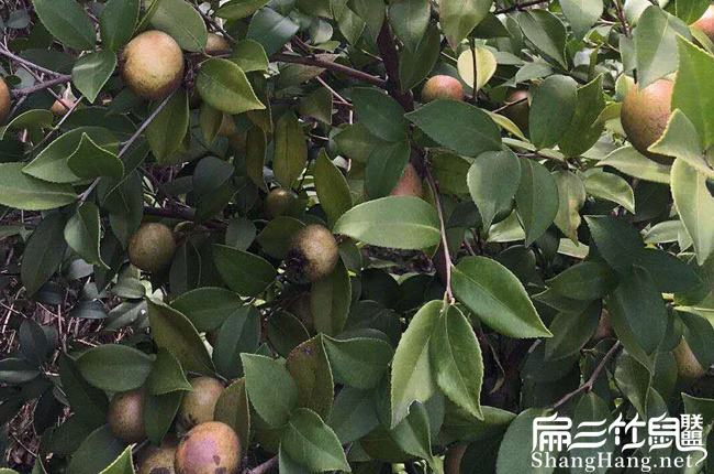 留坝县中国人喜欢喜欢