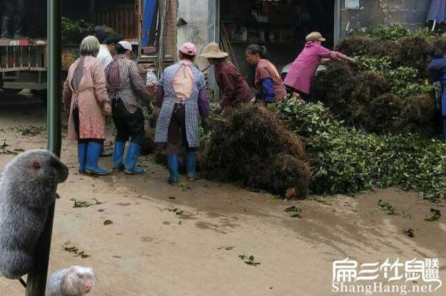 镇沅适合种植油茶树吗