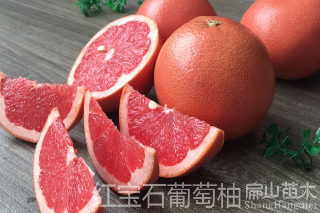 南宁红宝石柚子苗