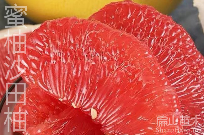 红心柚子苗种植基地