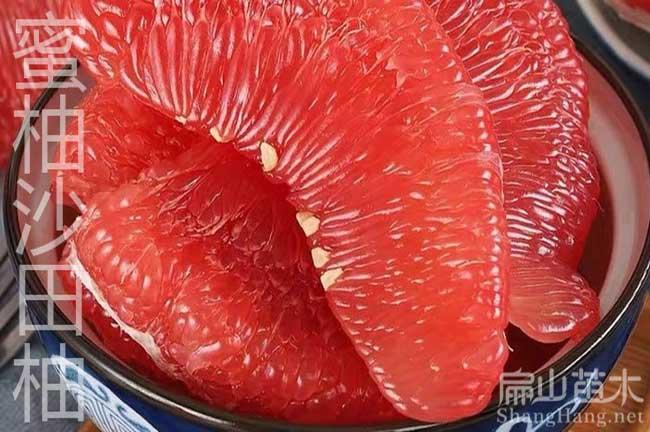 漳州红心柚子种植
