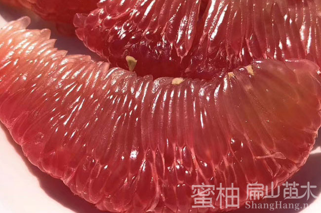 贵州柚子种植
