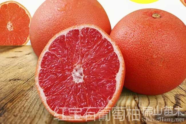 葡萄柚子苗