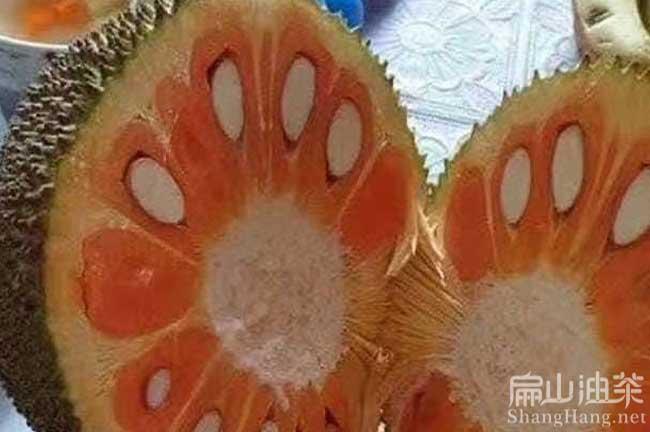 福建水果苗批发