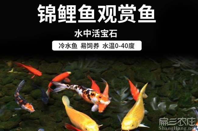 福建观赏鱼养殖