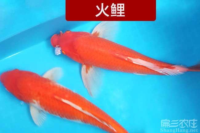 漳州观赏鱼养殖