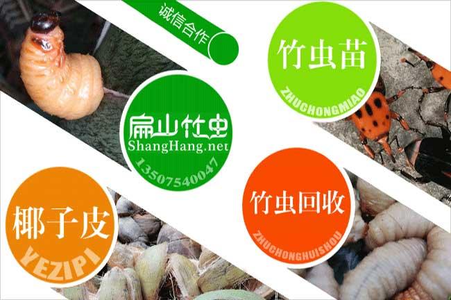 海南竹虫回收
