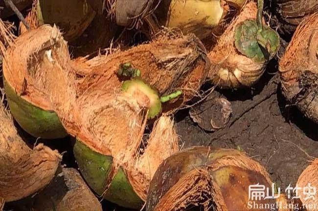永州竹虫喜欢吃什么