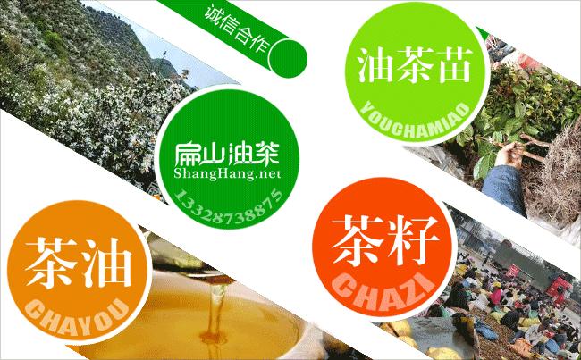 油茶施肥技术
