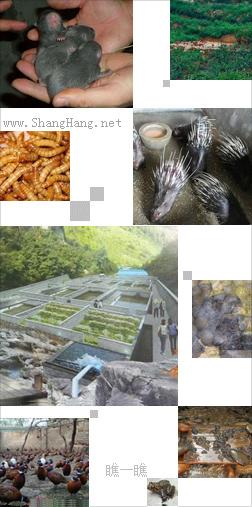 生态农庄养殖技术平台