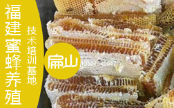 蜜蜂养殖基地