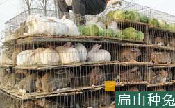 五指山兔子养殖技术培训