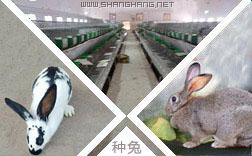 巫山县兔子种苗批发