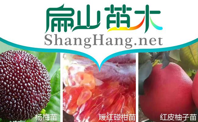 中国水果苗培育
