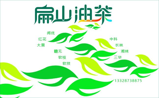 大果油茶种植基地