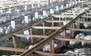 豚鼠养殖基地