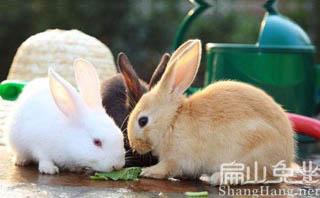 肉兔养殖基地