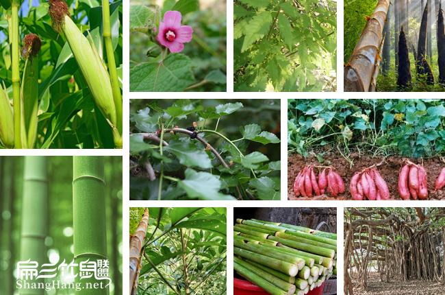 竹鼠食物图片