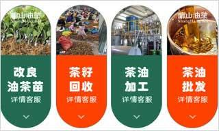 铜仁油茶苗培育示范基地