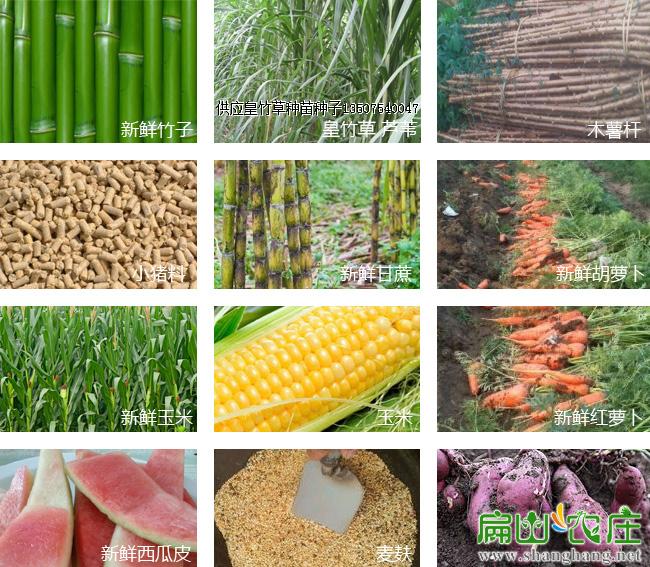 竹鼠食物分类